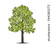 detached linden tree with... | Shutterstock .eps vector #544283272