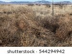 group of dead weedy shrubs on... | Shutterstock . vector #544294942