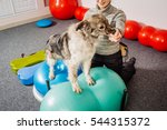 dog training in the fitness club | Shutterstock . vector #544315372