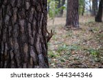 squirrel of brown color looks... | Shutterstock . vector #544344346
