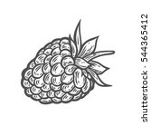 raspberry fruit. superfood...   Shutterstock . vector #544365412