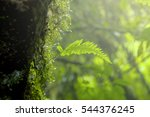 Fern And Moss Tree In National...