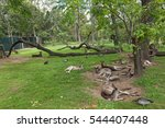 kangaroos   wallabies resting... | Shutterstock . vector #544407448