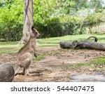 kangaroos in brisbane ... | Shutterstock . vector #544407475