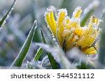 Frozen Dandelion 3