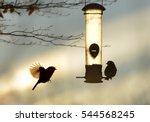 Garden Birds By A Bird Feeder...