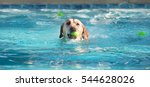 Cute Dog Swimming In Large Poo...