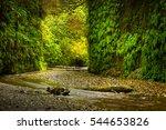 fern canyon prairie creek... | Shutterstock . vector #544653826