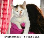 Cat Pet Sleeping On A Woman