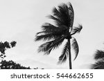 Small photo of A single palm tree pulled by gusty wind on a tropical beach with warm humid air blowing through the coconut palm fronds. Copyspace left.