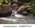 forest stream among stones....