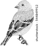 cute little bird   stylized... | Shutterstock .eps vector #544849912