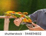 Sun Conure Parrot Birds Eating...