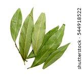 green laurel leaves on a white...   Shutterstock . vector #544918522