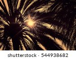 Dark Silhouettes Of Date Palms...