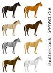 color horse set | Shutterstock .eps vector #544981726