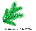vector pine branch
