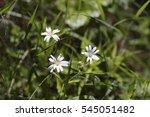 Three White Flower On Green...