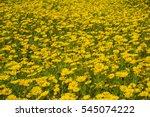 Stock photo flowers background 545074222