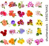Stock photo flower bouquet seasonal various flowers isolated 545076442
