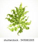 marine green algae object 2 ... | Shutterstock .eps vector #545081005