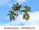 Palm Trees Against Blue Sky ...