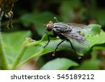 Fly Perched On A Leaf