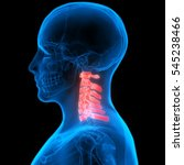 spinal cord a part of human... | Shutterstock . vector #545238466