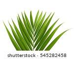 coconut leaves | Shutterstock . vector #545282458