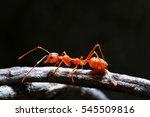 Macro Shot Of Red Ant In Natur...