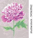 artistic peony flower | Shutterstock .eps vector #54563962