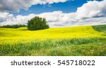 Small photo of Rural agricultural landscape with canola field adjoined to cereal field in Alberta, Canada