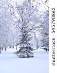 winter siberian city park  omsk ... | Shutterstock . vector #545790862