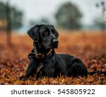 my dog | Shutterstock . vector #545805922