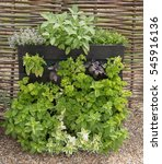 Mint  Parsley  Basil  Sage And...