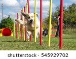 dog agility slalom  sports... | Shutterstock . vector #545929702