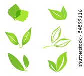 set of green leaves. vector... | Shutterstock .eps vector #54599116