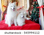two samoyed dog in the red bed... | Shutterstock . vector #545994112