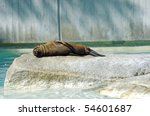 sleepy baby seal | Shutterstock . vector #54601687