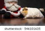 Cute Guinea Pig And Santa Claus ...