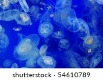 Beautiful Blue Moon Jelly Fish...