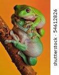 mating tree frogs | Shutterstock . vector #54612826