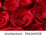 Stock photo close up of red roses and water drops 546164428