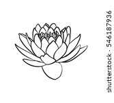 lotus flowers icon. the black... | Shutterstock .eps vector #546187936