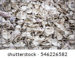Wall Filled Of Oyster Shell.