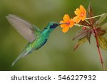 green and blue hummingbird... | Shutterstock . vector #546227932