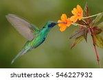 green and blue hummingbird...   Shutterstock . vector #546227932