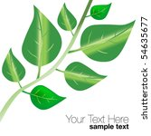 vector leaves | Shutterstock .eps vector #54635677
