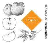 apple vector illustration. hand ...   Shutterstock .eps vector #546421948