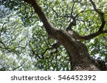 under the tree in forest | Shutterstock . vector #546452392
